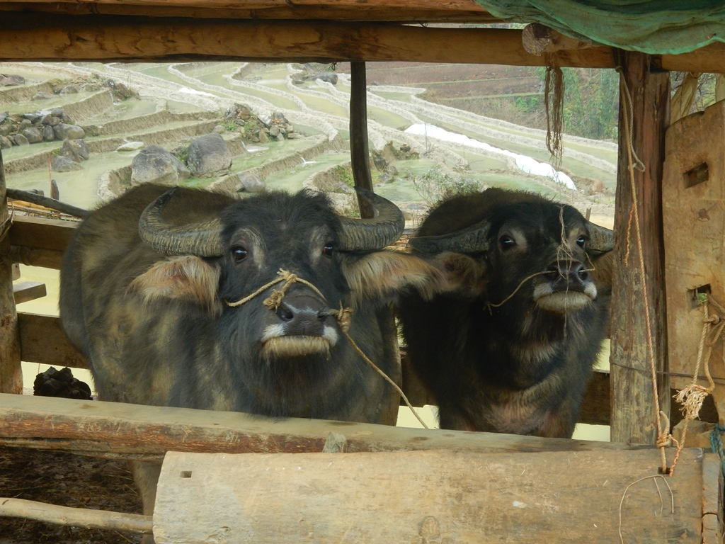 stall-bei-den-hmongs