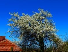 fruehling-in-bulgarien