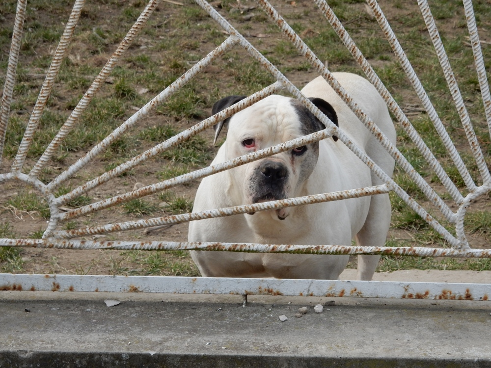 hunde-2
