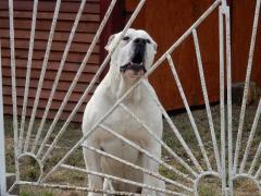 hunde-3