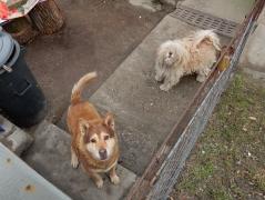 hunde-4