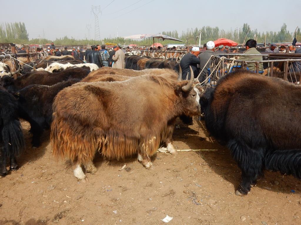 kashgar-viehmarkt-4