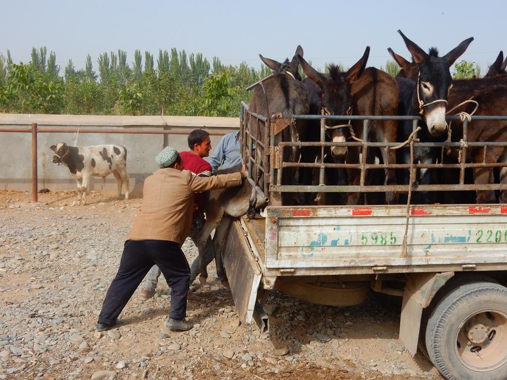 kashgar-viehmarkt-9
