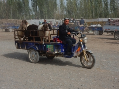 kashgar-viehmarkt-15
