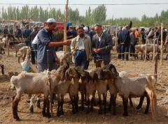 kashgar-viehmarkt-5