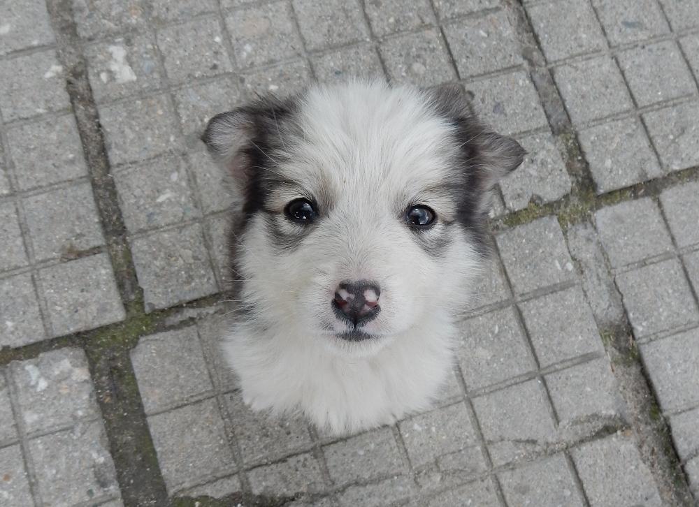 hund-3