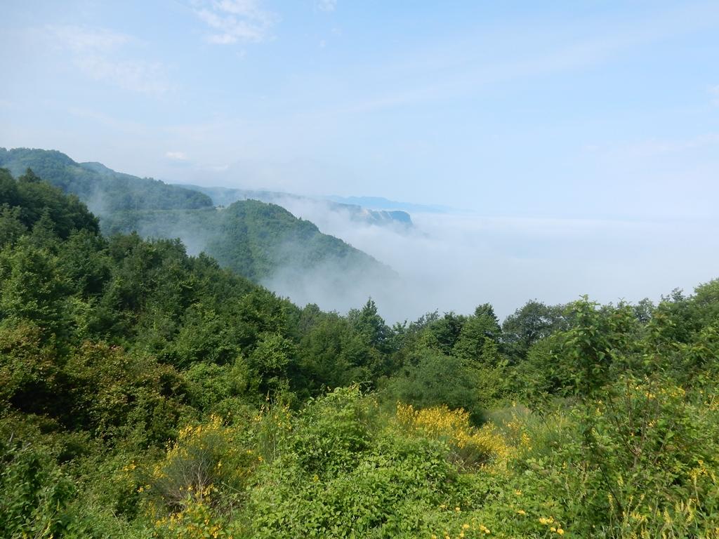 der-nebel-kommt
