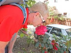 riesige-rosen