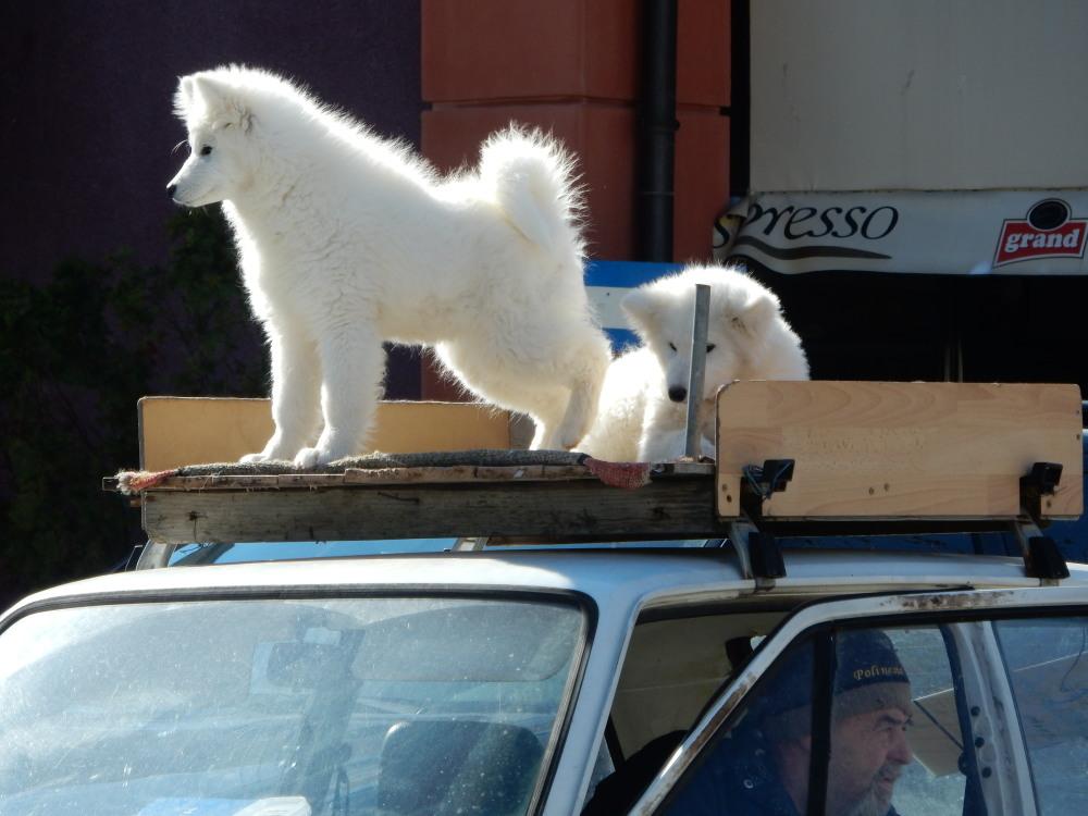 hunde-zu-verkaufen