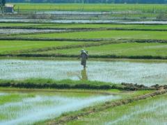 weite-reisfelder-im-sueden-vietnams-2