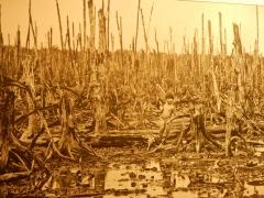 im-war-museum-vietnamesische-landschaft-nach-einem-napalm-angriff