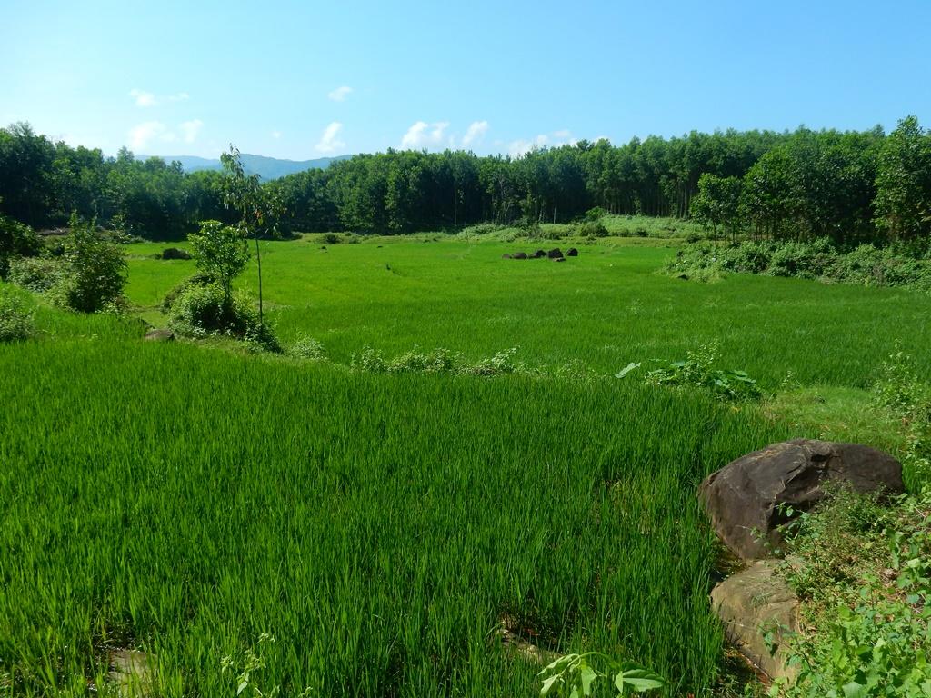 Reisfelder bei Tais Dorf 1