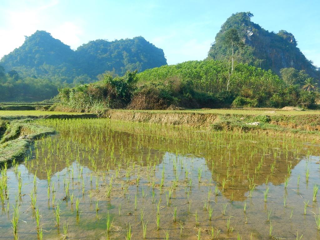 Reisfelder 4